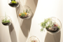 Tendliving | Eco Gardens