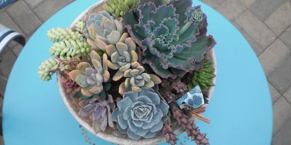 Aqua Succulents
