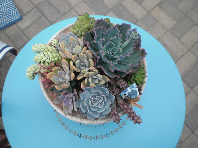Succulents-on-Aqua